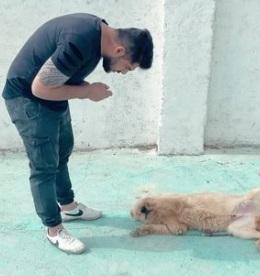 آموزش خجالت کشیدن به سگ